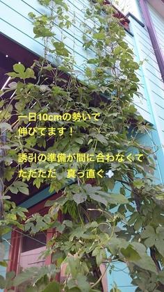 DSC_1296_1.JPG