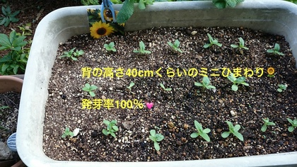 DSC_1297_1.JPG