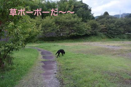 DSC_6822.JPG