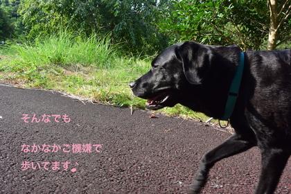 DSC_6849.JPG