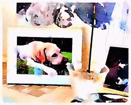 Waterlogue-2016-09-11-11-15-49.jpg