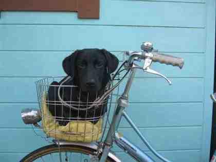 bike-2.jpeg