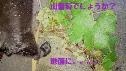 DSC_0823.JPG